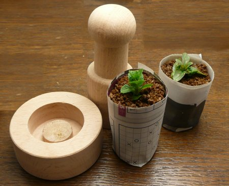 Paper pot maker for seedlings