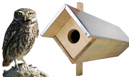 Little Owl Birdhouse